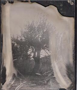 blog 1st plates, tree 4x5