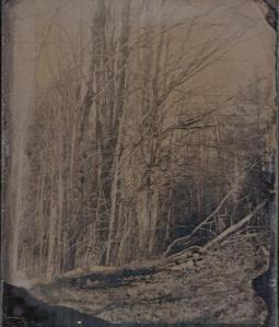 blog 1st plates trees 4x5